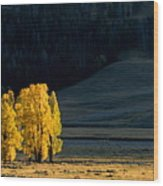 Gold In The Lamar Valley Wood Print