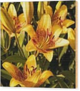 Gold Lilly Wood Print