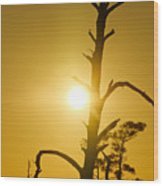 Gold Marsh Wood Print