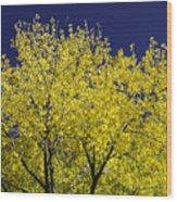 Gold On Blue Wood Print