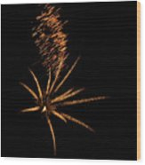 Gold Star Tail Wood Print