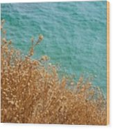 Gold Thistles And The Aegean Sea Wood Print