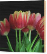 Gold Tip Tulips Wood Print by Tracy Hall