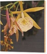 Gold Yellow Orchid  Wood Print