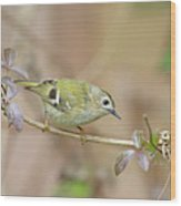 Goldcrest Wood Print