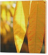 Golden Accent  Wood Print