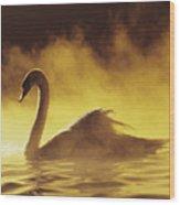 Golden African Swan Wood Print