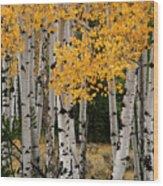 Golden Aspen Wood Print
