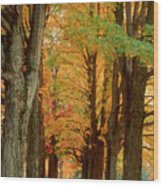 Golden Avenue Wood Print
