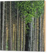 Golden Backlight Wood Print