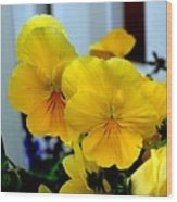 Golden Blooms Beside The Porch Wood Print