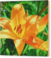 Golden Blossom Wood Print