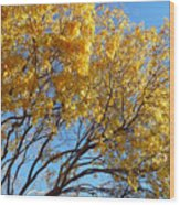 Golden Boughs Wood Print