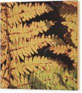 Golden Bracken Wood Print