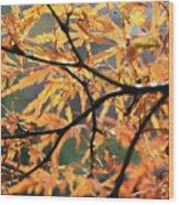 Golden Branch Wood Print