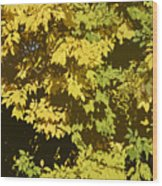 Golden Branches Wood Print
