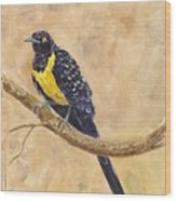 Golden Breasted Starling Wood Print