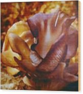 Golden Brown Wild Mushroom Wood Print