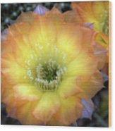 Golden Cactus Bloom Wood Print