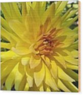 Golden Dahlia Beauty Wood Print