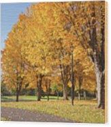 Golden Colors In Autumn Bellavista Park Oregon. Wood Print