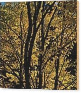Golden Colors Of Autumn In New England  Wood Print