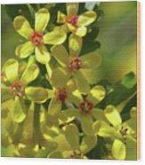 Golden Currant Blossoms Wood Print