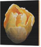 Golden Double Tulip Wood Print