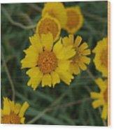 Golden Dyssodia Wood Print