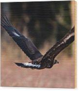 Golden Eagle Flying Wood Print
