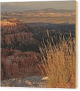 Golden Evening Light Bryce Canyon 1 Wood Print