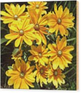 Golden Eyed Susans Wood Print