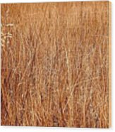 Golden Field Wood Print