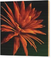 Golden Fireworks Flower Wood Print