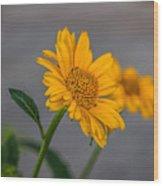 Golden Flower II Wood Print