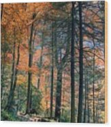 Golden Forest Path Wood Print
