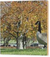 Golden Goose Wood Print