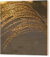 Golden Grass Wood Print