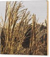 Golden Grass Flowers Wood Print