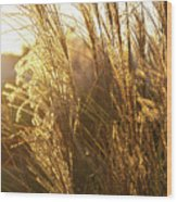 Golden Grass In Sunset Wood Print
