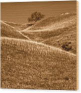 Golden Hills Of California Photograph Wood Print