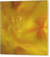 Golden Hour Flower Wood Print
