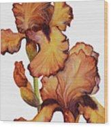 Golden Iris Wood Print