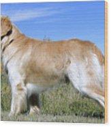 Golden Labrador - Cheemo Wood Print