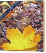 Golden Leaf Wood Print