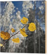 Golden Leaves Against A Muted Forest Wood Print