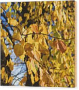 Golden Leaves Wood Print