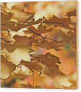 Golden Light Autumn Maple Leaves Wood Print