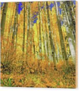 Golden Light Of The Aspens - Colorful Colorado - Aspen Trees Wood Print