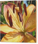 Golden Lily Flower Orange Brown Lilies Art Prints Baslee Troutman Wood Print
